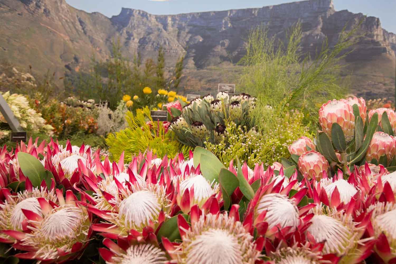 Cape Town's Kirstenbosch National Botanical Garden RHS Chelsea Flower Show 2014