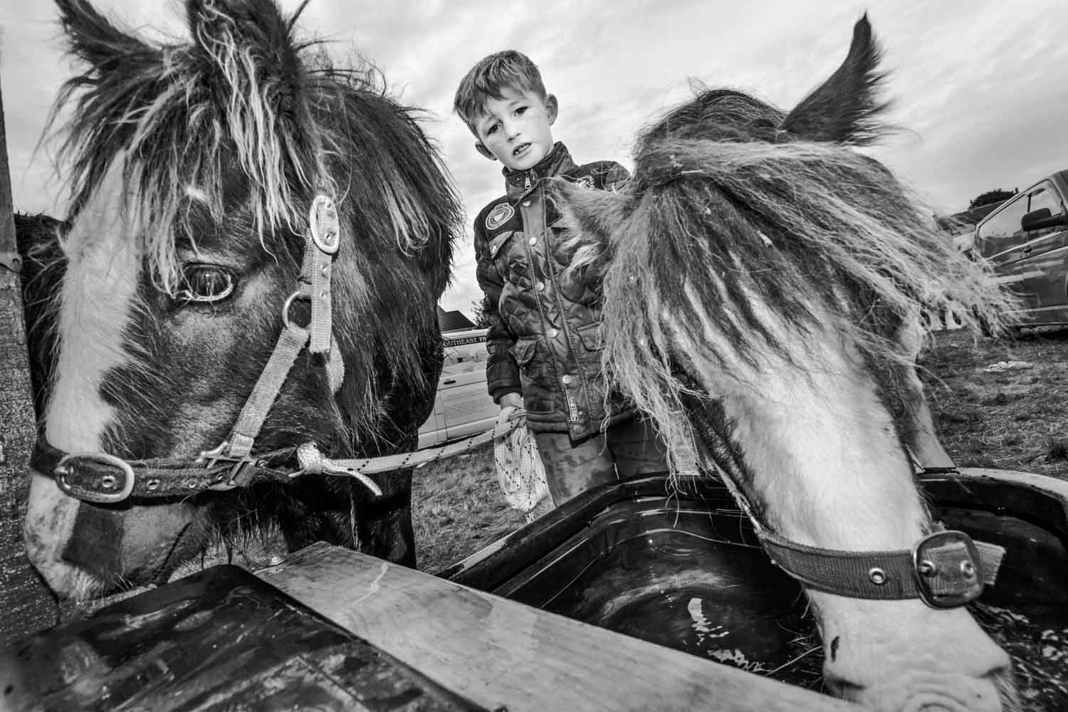 Traveller Boy and Ponies