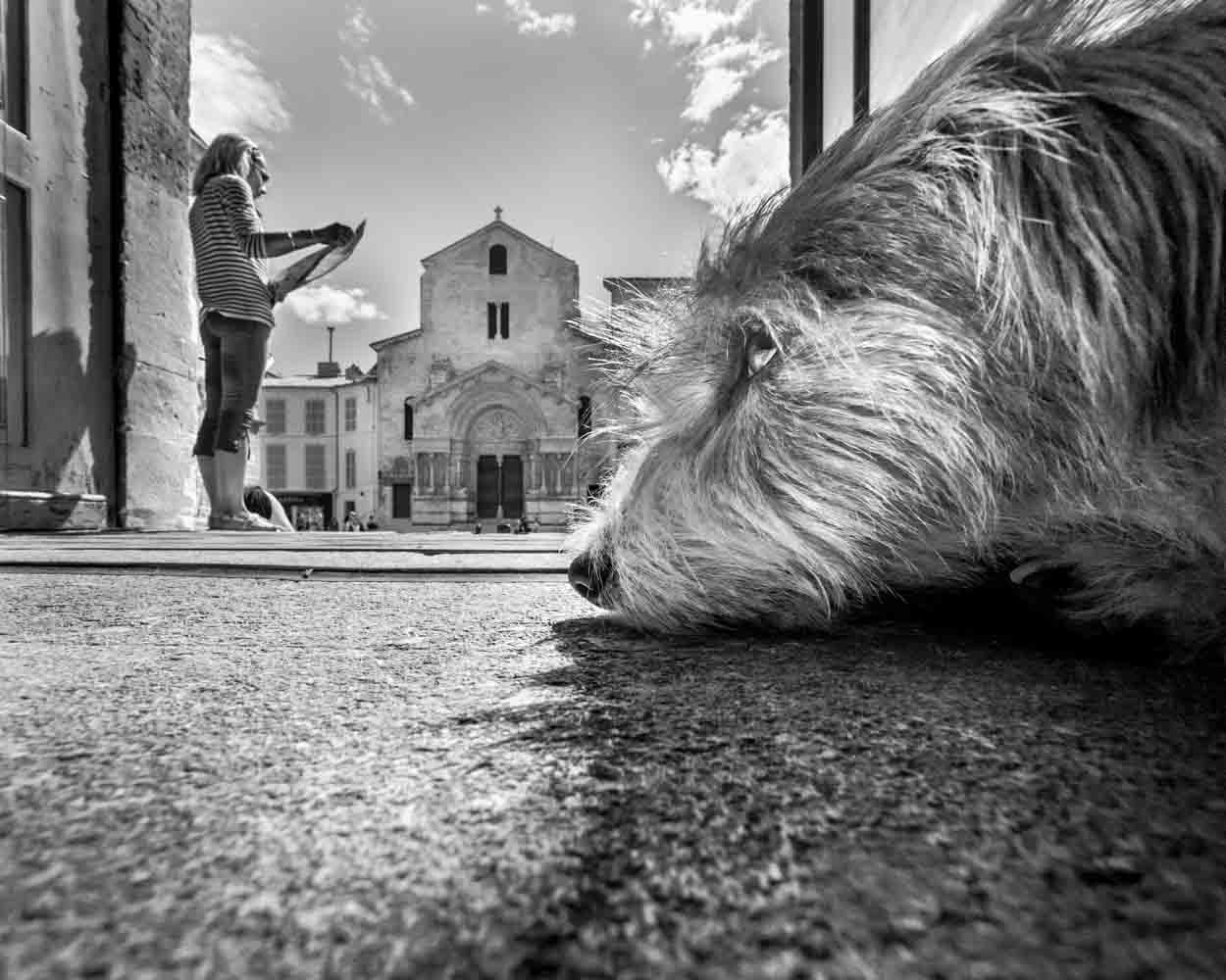 Dog in Arles