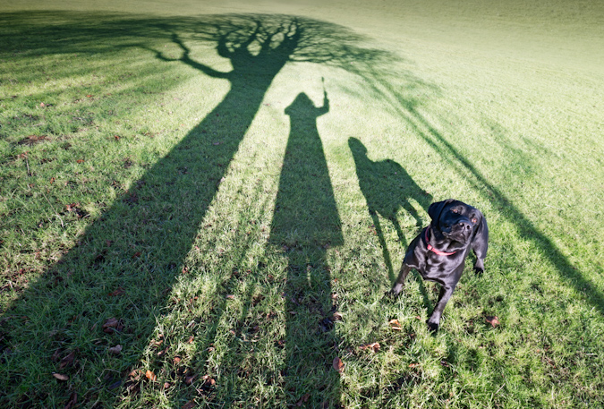 My Dog Stanmer Park Shadows